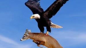 The Eagle Story - Inspirational Short Story